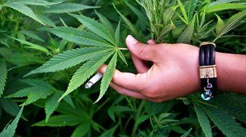 מה העונש על &#34שימוש עצמי&#34 בסמים קלים ?